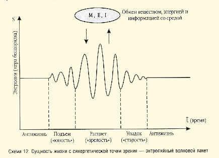Схема 12. Сущность жизни с синергетической точки зрения - энтропийный волновой пакет
